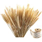 Golden Dried Natural Wheat Sheave Bundle Premium Fall Arrangements with Natural Laces Burlap Craft Lace Ribbon Roll for DIY D