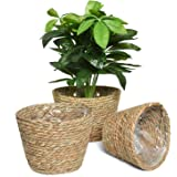 Dinaso Seagrass Plant Baskets, Set of 3 Woven Planter Basket 100% Natural Flowers Pot Holder Container for Indoor Outdoor Dec