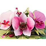 TRUANCE Pop Up Greeting Card Orchid Flower- 3D Cards For Birthday, Anniversary, Mothers Day, Thank You Cards, Card for Mom, V