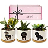 GIFTGIRL Dachshund Gifts for Women or Weiner Dog Gifts for Women - Our Succulent Pots Make Great Daschund Gifts for Women. Th