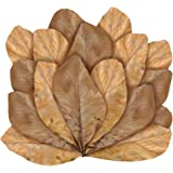 JOR 24 Pack Large Catappa Indian Almond Leaves for Bettas, 5-7 Inches, Effortless Water Conditioning, Great Value, Helps Bett