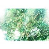 (ヒーリングアート TSUKASA) 開運グッズ 風水アイテム 健康運 快気祝い 自然 エネルギー ヒーリング CGアー…