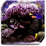 Aquarium Radiance