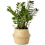 Artera Woven Seagrass Plant Basket - Wicker Belly Basket Planter Indoor with Plastic Liner and Handles, Natural Plant Pot for