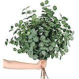 Miracliy 14 PCS Artificial Eucalyptus Stems, Faux Eucalyptus Leaves Greenery Stems Bulk for Vase Wedding Home Party Decoratio