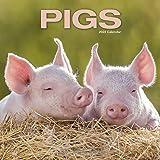 Pig Calendar - Cute Animal Calendar - Calendars 2021 - 2022 Wall Calendars - Animal Calendar - Pigs 16 Month Wall Calendar by