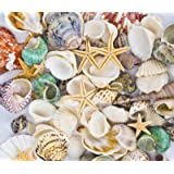 Famoby Sea Shells Mixed Beach Seashells Starfish for Beach Theme Party Wedding Decorations DIY Crafts Candle Making Fish Tank