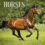 2020年カレンダー◆[PetPrints]馬(ウマ)カレンダー [並行輸入品]