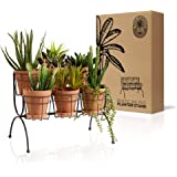 Regal Trunk 6 Pot Tiered Plant Stand - Rustic Indoor Outdoor Plant Stand - Flower Pot Stand - Herb Plant Stands - Succulent P