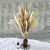 Total 60 Pcs | 15 Pcs White Pampas & 15 Pcs Brown Pampas & 30 Pcs Reed Grass/Natural Dried Pampas Grass for Flower Arrangemen