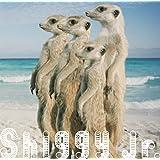 サマータイムラブ(初回限定盤)(DVD付)