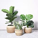 ROSGONIA Seagrass Plant Basket Set of 3- Boho Basket Seagrass Belly Basket- Storage Basket Picnic Basket Plant Pot Cover- Han