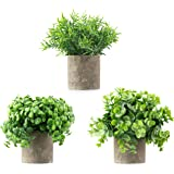 Casaluxe Potted Artificial Eucalyptus, Rosemary and Boxwood Plants, Set of 3 – Two-Toned Plastic Greenery in Cement-Coloured