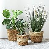 Seagrass Plant Basket for Indoor Outdoor Planter, Natural Storage Baskets Plant Pot Cover Storage Organizer, 3 Pack