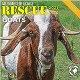 Bright Day Calendars 2021 Rescue Goats Wall Calendar by Bright Day, 12 x 12 Inch, Cute Farm Animals Calendars for a Cause