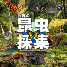 世界の昆虫採集