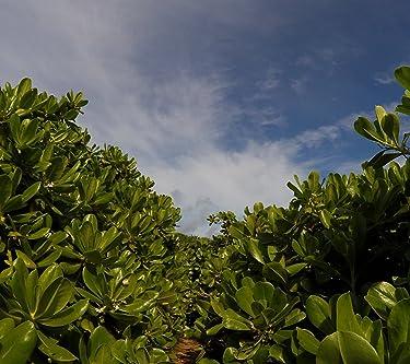 沖縄  iPhone/Androidスマホ壁紙(1080×960)-1 - 宮古島・宮古諸島