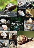 宮崎県のカタツムリ