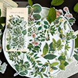 60pcs Laptop Stickers Scrapbook Stickers, Doraking DIY Decorative Green Plants Set Stickers for Laptop,Envelop,Scrapbook,Wate