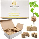 Rooting Hormone Cubes for Cloning Kit - Biodegradable Root Booster for Fast Root Growth - Advanced Cloning Hormone Rockwool A