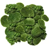 Chuangdi 20 Pieces Artificial Moss Rock Assorted Sized Decorative Faux Green Stones Green Moss Balls with 20 Gram Preserved G