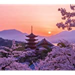世界遺産 HD(1440×1280) 桜色の厳島神社五重塔の夕景