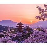 世界遺産 Android(960×800)待ち受け 桜色の厳島神社五重塔の夕景