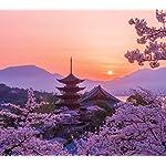 世界遺産 QHD(1080×960) 桜色の厳島神社五重塔の夕景