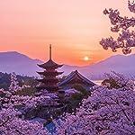 世界遺産 iPad壁紙 桜色の厳島神社五重塔の夕景