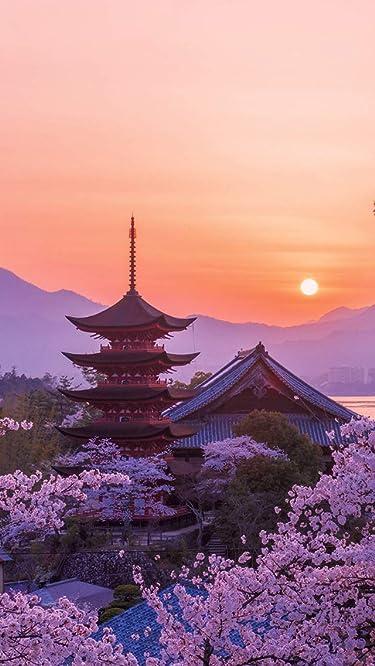 世界遺産  iPhone/Androidスマホ壁紙(640×1136)-1 - 桜色の厳島神社五重塔の夕景