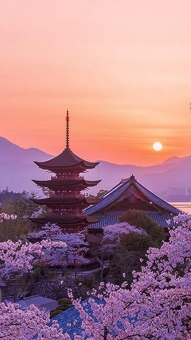 世界遺産  iPhone/Androidスマホ壁紙(750×1334)-1 - 桜色の厳島神社五重塔の夕景