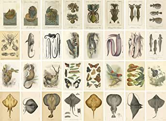 「博物図鑑」カードセット32枚 AD.1836年〜1902年リトグラフ縮小複製