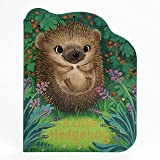 A Little Hedgehog