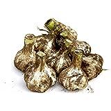 にんにく 1kg 青森県産 土付き ML混合 福地ホワイト六片種