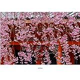 京の彩り・桜 (KYOTO PHOTOGRAPHIC SERIES)