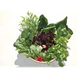 九州 佐賀県産 園田農園 葉物野菜セット (JAS有機栽培)