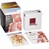 Anatomy & Physiology Flash Cards