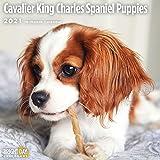 Bright Day Calendars 2021 Cavalier King Charles Spaniel Puppies Wall Calendar by Bright Day, 12 x 12 Inch, Cute Dog