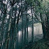 In The Dark Woods [CD+DVD]