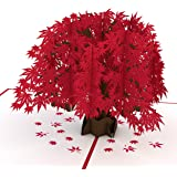 Lovepop Japanese Maple Pop Up Card, 3D Card, Tree Card, Nature Card, Foliage Card, Birthday Card