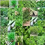 Herb Seeds Basil Lemon Grass Coriander Dill Chive Mint Parsley Corriander 7 Packs