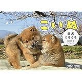 2019カレンダー こいぬ 柴犬ころころ ([カレンダー])