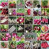 Radish Heirloom Mix 50 Seeds Vegetable Garden Autumn Winter Spring Non-GMO Mixed