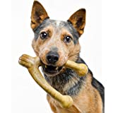 Pet Qwerks Wish BarkBone Dog Chew Toy, Peanut Butter Flavor, Large