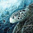 うみがめぐり  -自然をみつめる絵本-