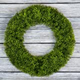 Boxwood Wreath, Artificial Wreath for The Front Door by Pure Garden, Home Décor, UV Resistant - 14 Inches, Rubber, Green, 20x