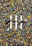 BORDERLESS [CD + BONUS CD + BOOK] [完全生産限定盤]