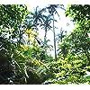 沖縄 - 米原のヤエヤマヤシ群落 HD(1440×1280) 135040