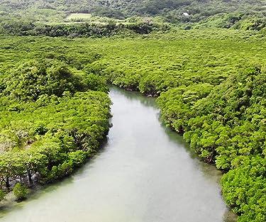沖縄  iPhone/Androidスマホ壁紙(960×800)-1 - 石垣島・吹通川