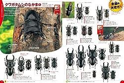 2000種以上の昆虫を美しい昆虫写真で掲載!